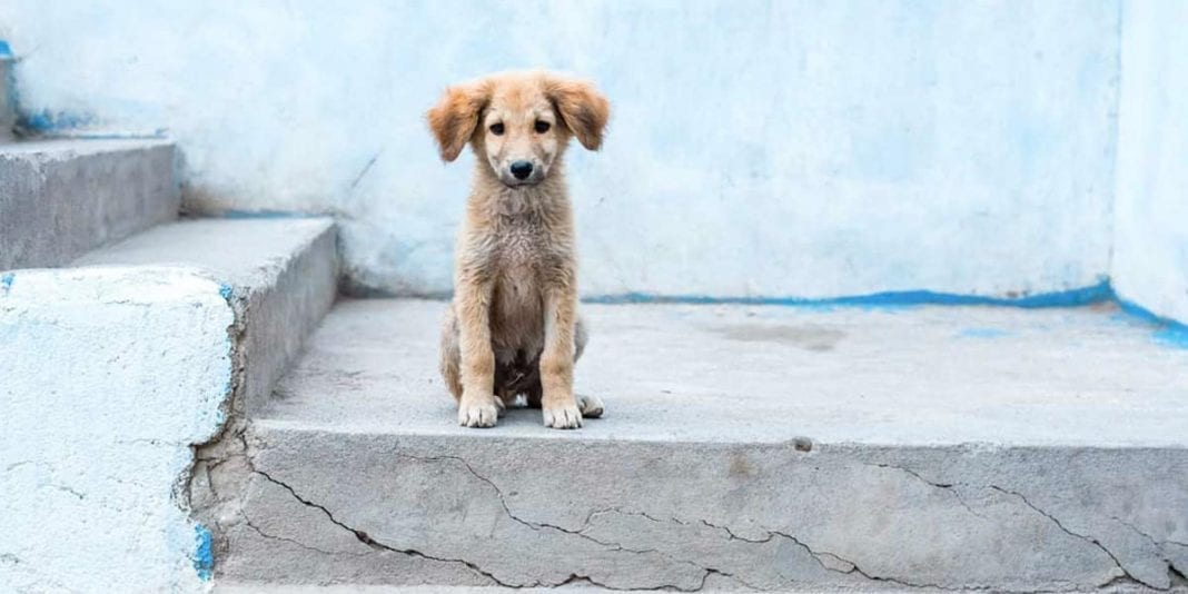 52 mil millones de pesos invertirá el Distrito en protección animal