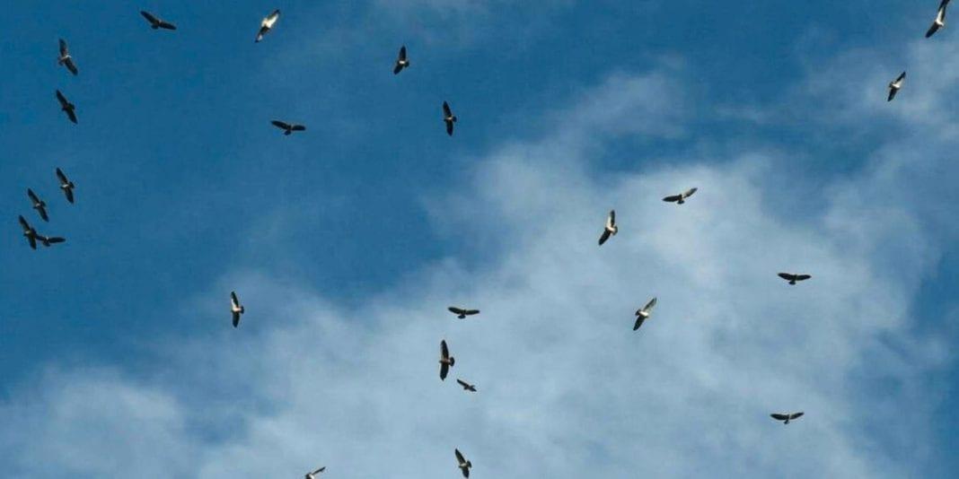 Alerta por caza indiscriminada de aves en Cundinamarca