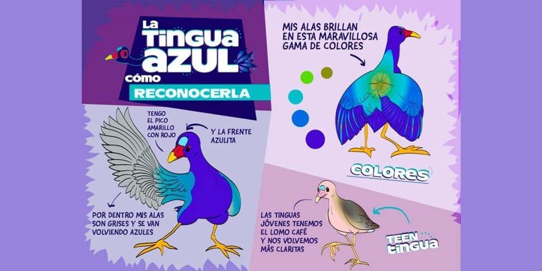 Bogotá crea campaña para proteger aves migratorias