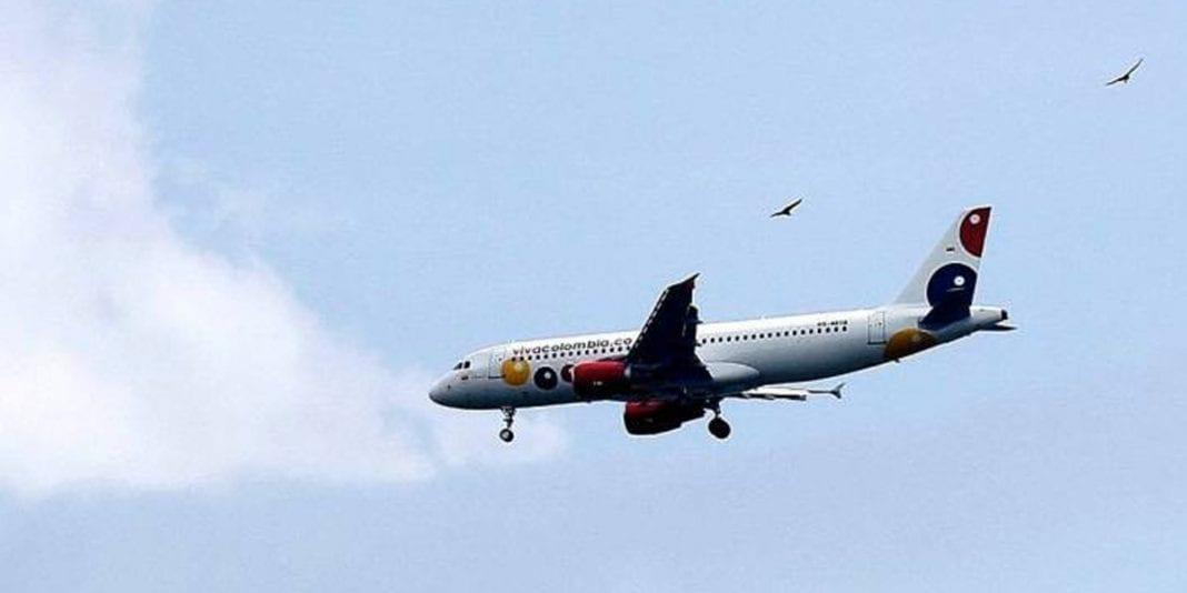 CAR actúa frente a riesgos para el tránsito aéreo por presencia de aves