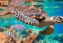 Conozca 5 de las 407 especies animales amenazadas en Colombia