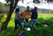 """Cundinamarca-Inició-plan-piloto-del-programa-""""Abejas-con-la-Conservación"""
