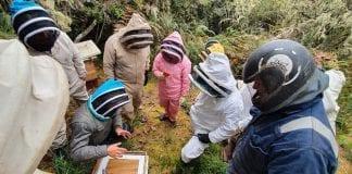 Cundinamarca le apuesta a conservar las abejas