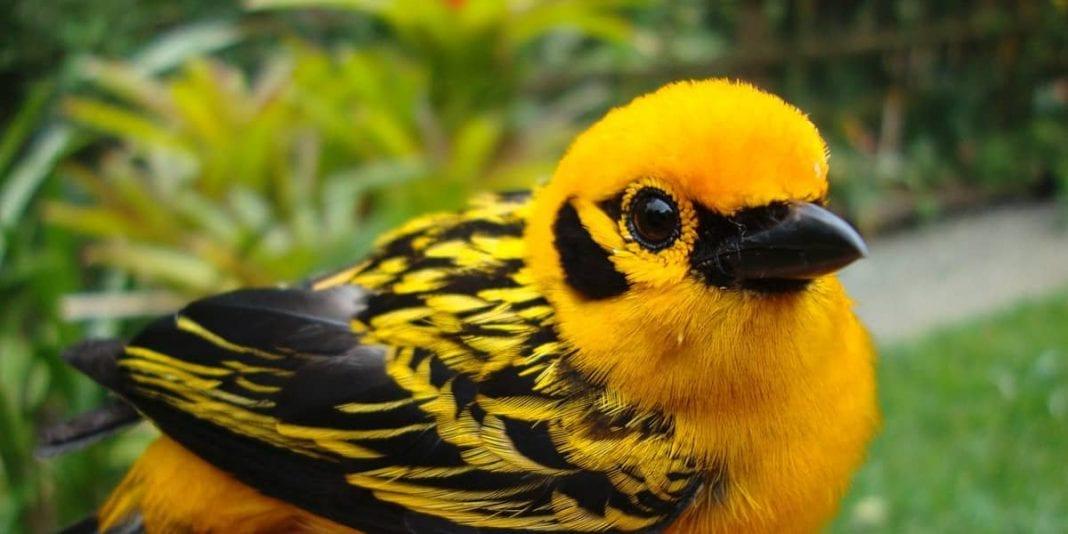 Este año, el festival de aves más antiguo de Colombia será virtual