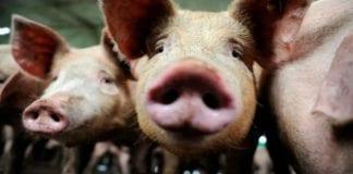 Más de 850 mil virus de animales podrían afectar a humanos