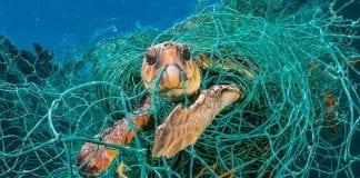 Redes de pesca abandonas el peor enemigo de la vida marina