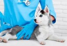 vacunación gratis