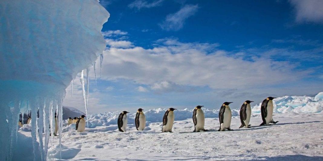 Calentamiento global ocasionó cambios en los animales del ártico