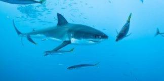 Colombia Prohíbe la pesca de tiburones en su territorio