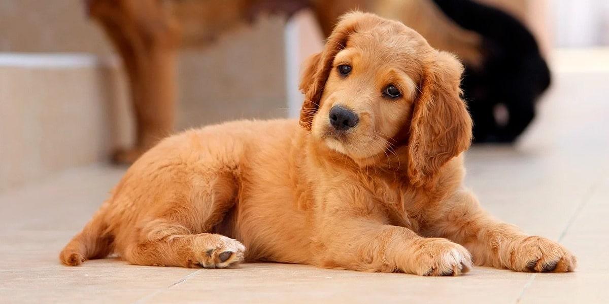 Mitos y verdades de la esterilización de perros y gatos