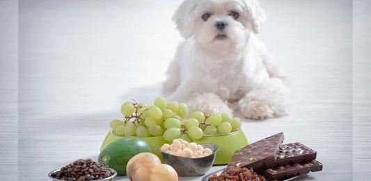 Alimentos que debemos evitar darle a nuestro perro
