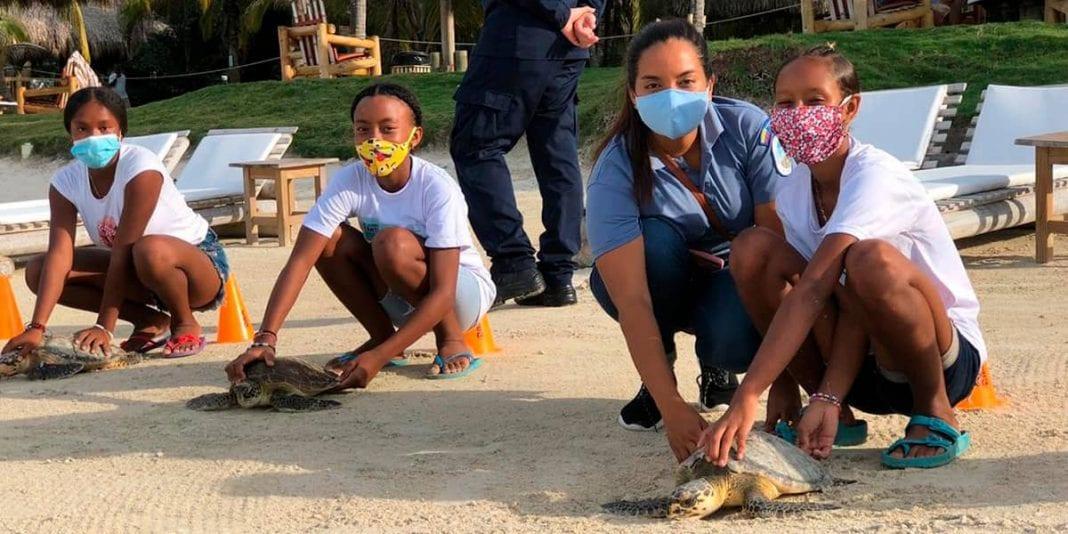 Liberan 13 tortugas marinas en el Caribe colombiano