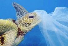Por esta razón los animales marinos no pueden dejar de comer plástico