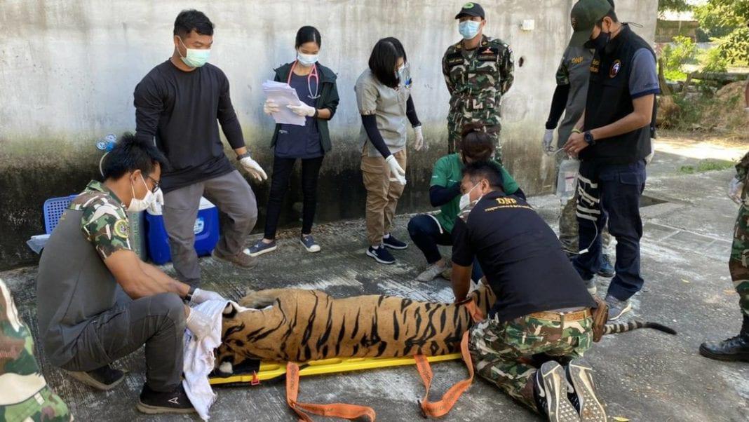 tigre en Tailandia
