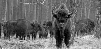 5 animales en riesgo de extinguirse en este 2021
