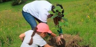 Bogotá espera plantar 200.000 árboles este año