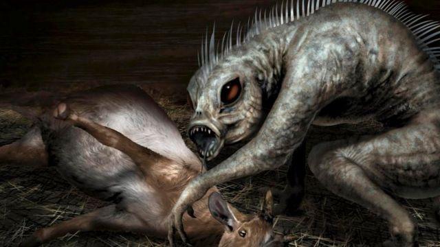 Misteriosa muerte de animales en Chile tiene preocupadas a autoridades