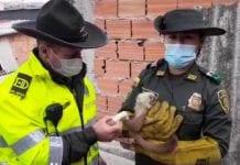 Rescatan en Bogotá a un mono capuchino