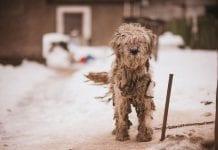 Así puede denunciar un caso de maltrato animal en Bogotá