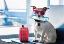 Esto es lo que debe saber si va a viajar en avión con su mascota