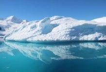 Extrañas criaturas fueron halladas en la Antártida a un kilómetro de profundidad