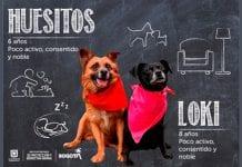 Se reactivan las jornadas presenciales de adopción de perros y gatos en Bogotá