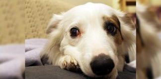Descubra qué le quiere decir su perro con el lenguaje corporal
