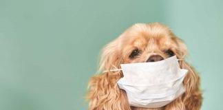 Rusia anuncia primera vacuna contra el covid 19 para animales