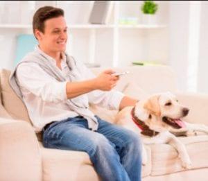 El servicio streaming para perros que sorprende en las redes