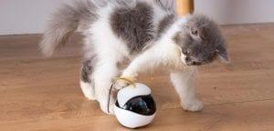 Conoce a Ebo un robot que juega con gatos-Momento24