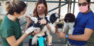 perros vacunacion
